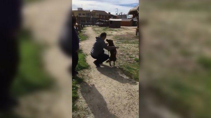 Una perra se reencontró con su dueño y el video se volvió viral