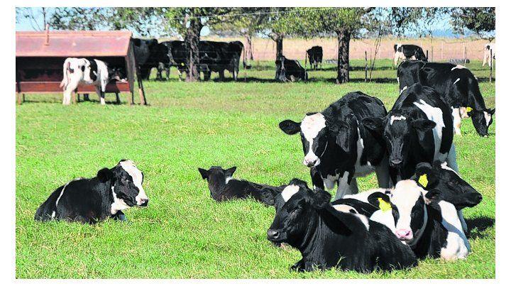 En baja. El sector lácteo está en retroceso en el país.
