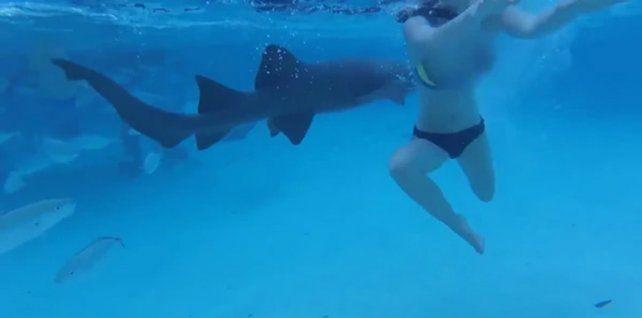Aterrador. Un tiburón atacó a la mujer mientras realizaba esnórquel en un estanque.