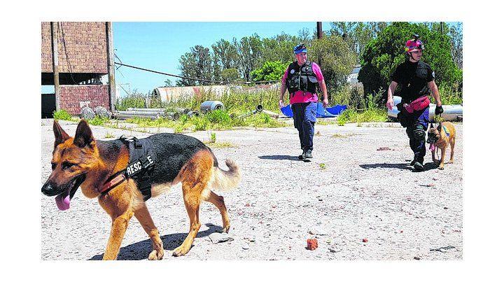 sabuesos. Los perros de Bomberos trabajaron en el caso Maldonado.