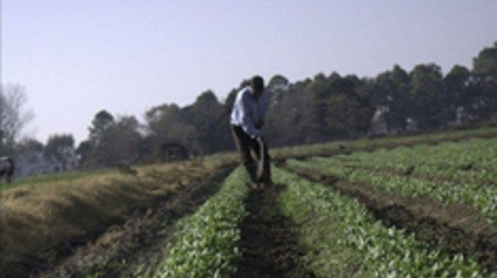 de aquí nomás. El programa ofrece verduras cosechadas en las últimas 48 horas y a menos de 25 kilómetros.