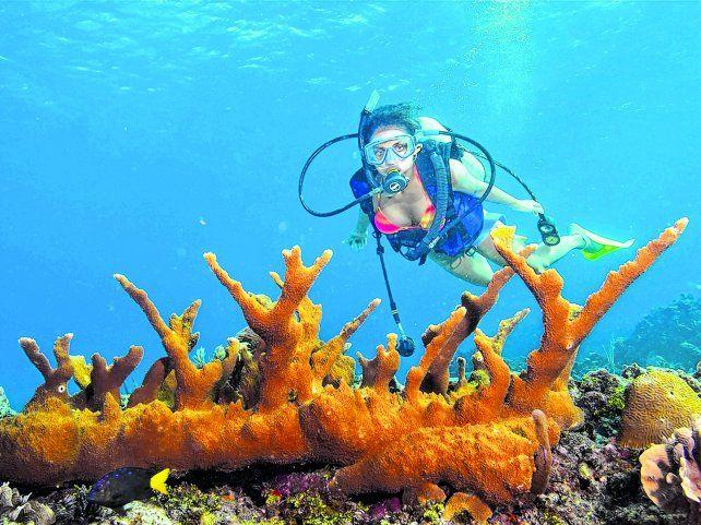 Bajo el mar. El snorkeling es una actividad que permite descubrir el fascinante mundo subacuático de la isla caribeña.