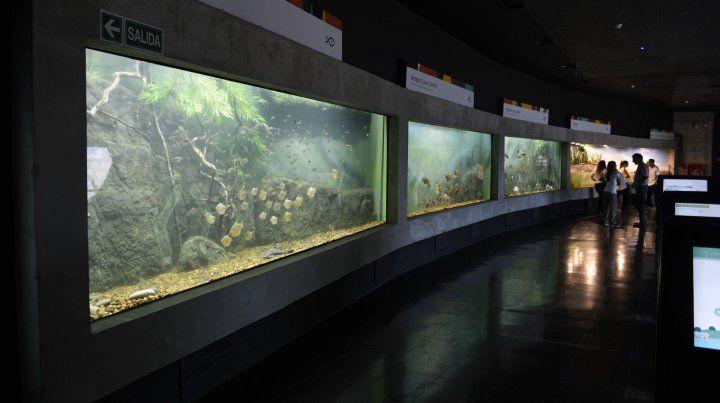 Flamante. Toda la riqueza ictícola podrá ser disfrutada por los rosarinos en el acuario más grande del país.