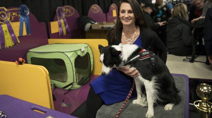 Los mejores perros de la Westminster Kennel Club 2018