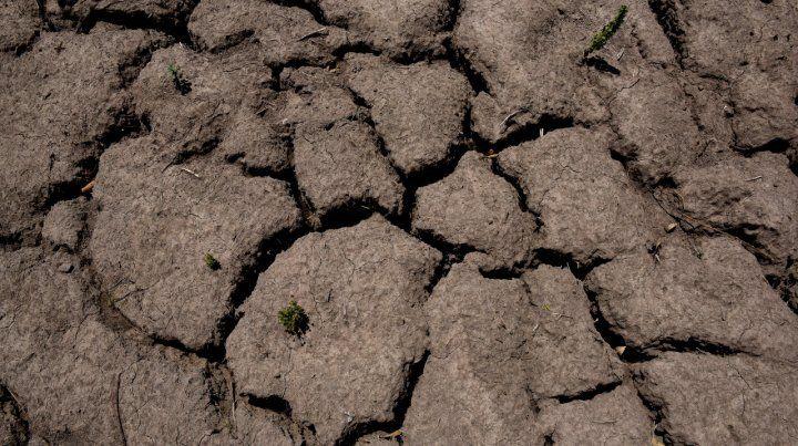 Sequía: el 80 por ciento de la zona núcleo está afectada