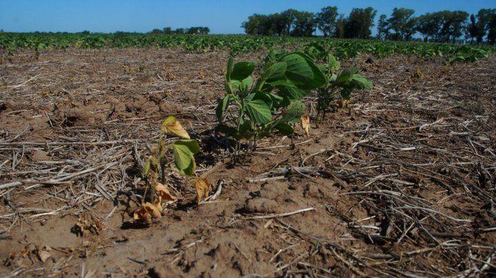 Tierra seca. La sequía sería la peor en los últimos 70 años.