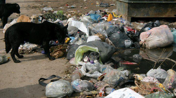 La concejala Agustina Bouza dijo que la muerte de 17 perros implica alto riesgo sanitario.