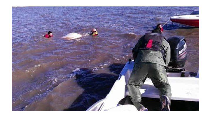 Reanudan las tareas de rastrillaje en la laguna de Melincué para hallar al pescador desaparecido