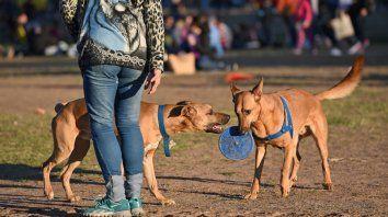 El nuevo código tendrá un norma específica sobre el tenencia responsable de mascotas.