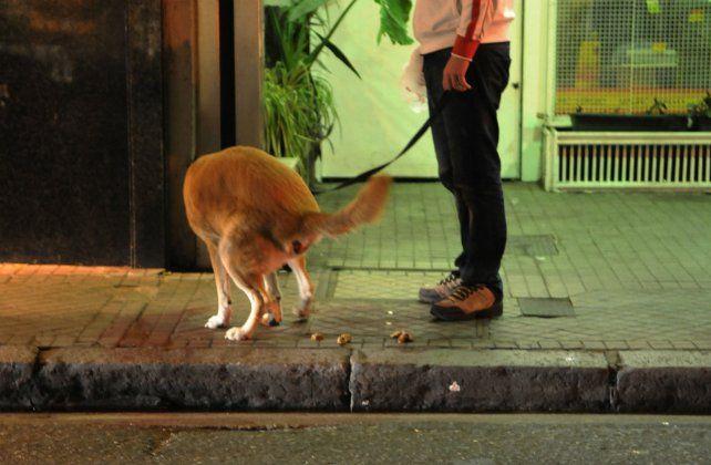El nuevo Código de Convivencia también regula la tenencia responsable de perros y gatos.