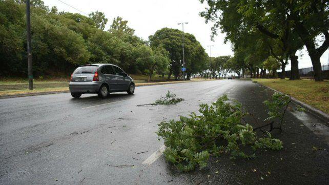 Unos 20 reclamos por árboles y ramas caídas, el saldo de una mañana con fuertes ráfagas
