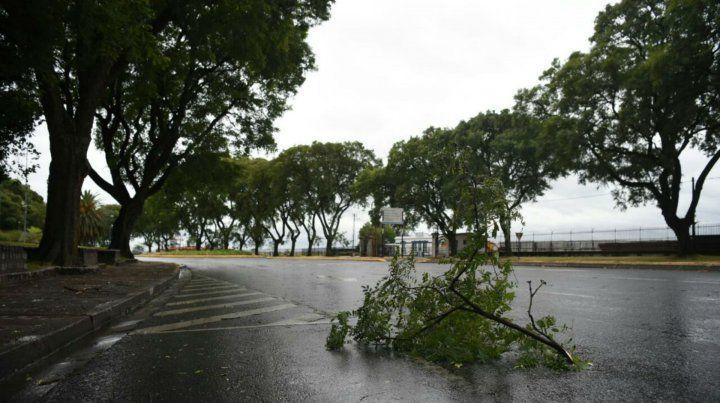 Ramas caídas cobre avenida Belgrano.