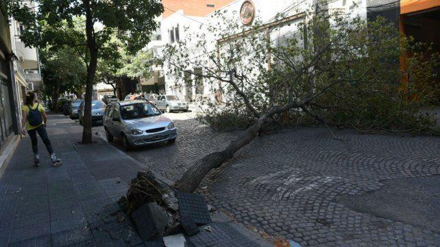 En Jujuy y Oroño un árbol impide la circulación de vehículos.