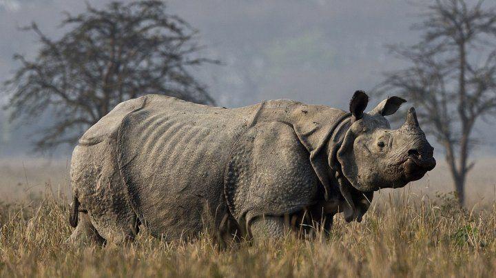 Murió en Kenia el último macho de rinoceronte blanco del mundo