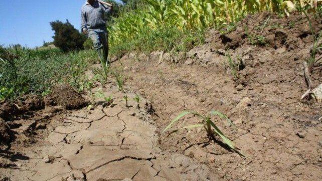 Productores afectados por la sequía ya pueden tramitar sus certificados