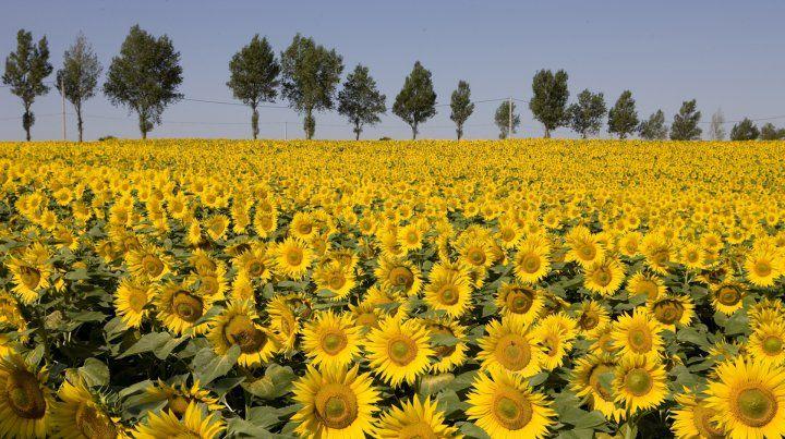 agro. Organismos locales y extranjeros vuelven a reducir los pronósticos de producción