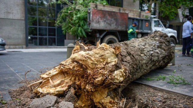 Cayó un árbol de gran porte en uno de los laterales de la plaza Guernica