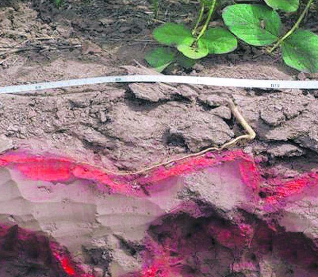 suelo. El efecto de la compactación sobre el crecimiento de raíces.