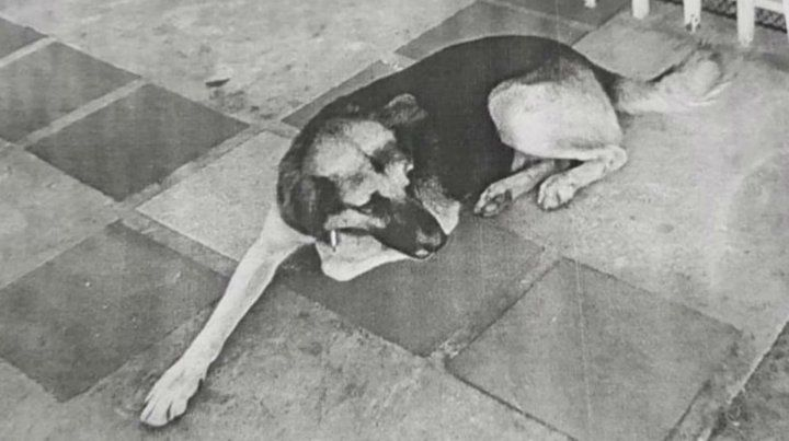 La imagen de Pufi que las autoridades difundieron para hallarlo.