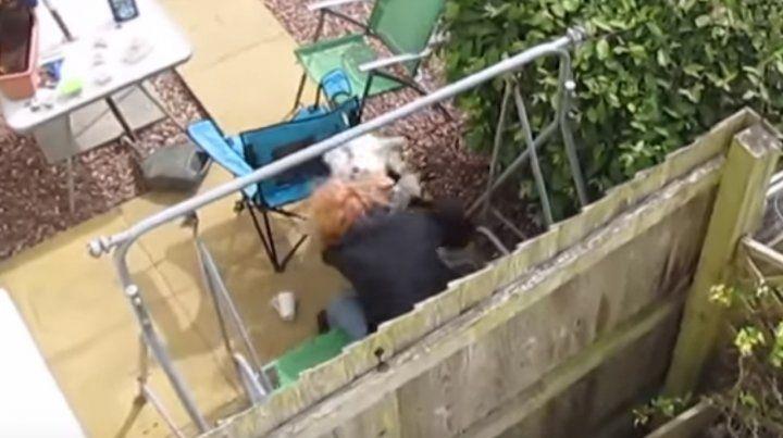 Golpeó a su perro contra el piso, la filmaron y terminó en prisión