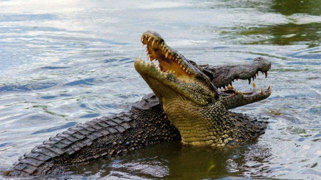 El acusado de violación fue encerrado con los cocodrilos.
