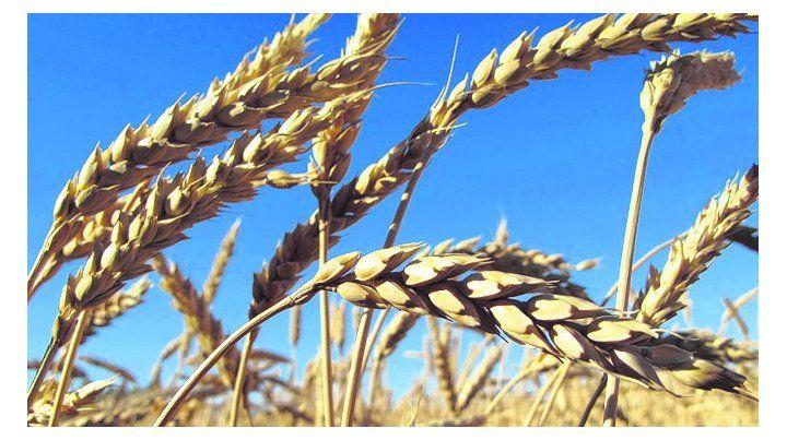 nuevo ciclo. Especialistas analizarán la competitividad del cereal.