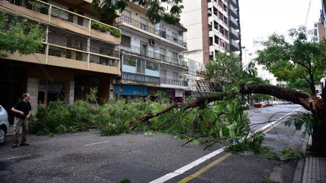 Corrientes y Pasco. Cayó un árbol y ocupó la calzada