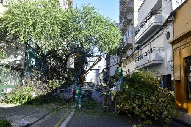 En acción. Los operarios podaron finalmente ayer las espinosas ramas.