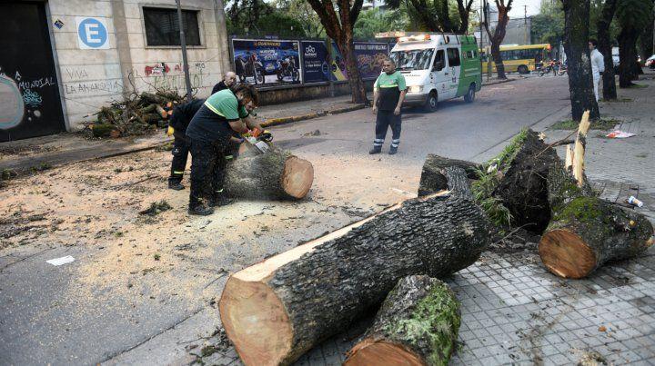 Las cuadrillas trabajan para quitar un árbol caído en Suipacha y Urquiza.