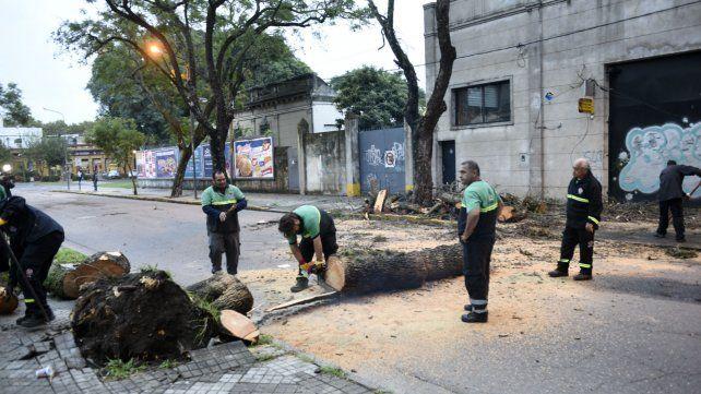 El fuerte viento derribó árboles y trece columnas en distintas zonas de la ciudad