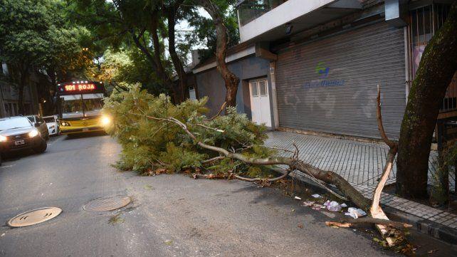 Una rama cayó y arrastró cables en San Lorenzo al 2000.