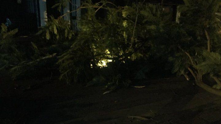 Barrio Arroyito. En José Ingenieros al 800 un árbol cayó y arrastró el cable del alumbrado público.