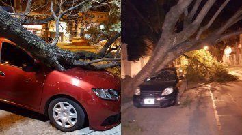 Árboles caídos. Dos autos aplastados por troncos tras las ráfagas de viento.