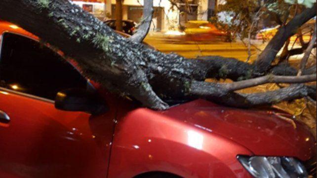 Fuertes ráfagas de viento derrumbaron árboles en distintos puntos de Rosario