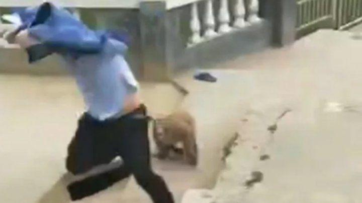Un turista empujó a un mono que se vengó con crueldad