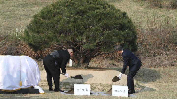 Kim y Moon plantaron y regaron un pino
