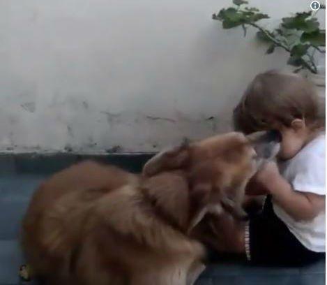 Fein y un tierno video en homenaje a su mascota en el Día del Animal