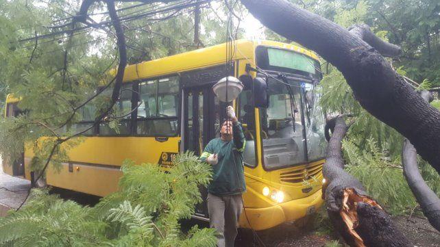 Un árbol cayó sobre un colectivo en Salta y Cafferata