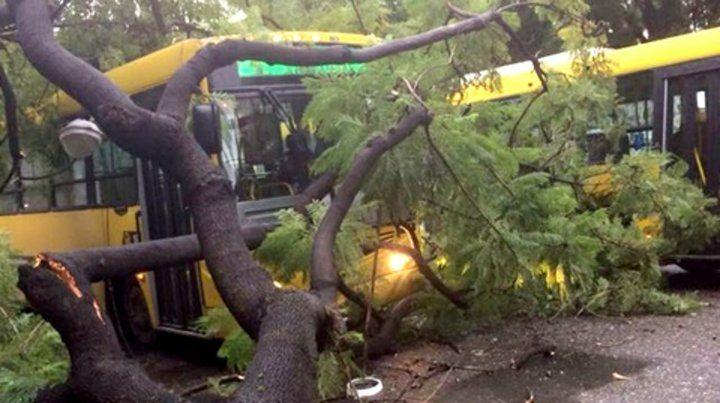 colectivo. El parabrisas del micro quedó destrozado por la caída de un árbol en Salta y Cafferata.