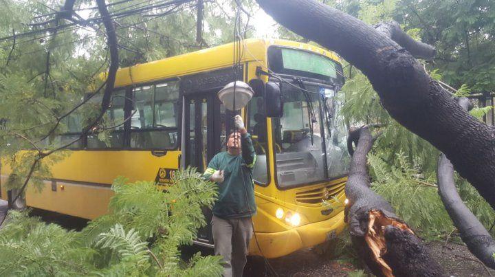 El temporal ya derribó cerca de 300 árboles en seis días