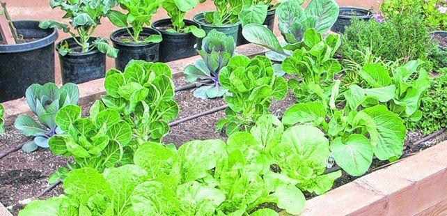 en el balcón. Un lugar soleado y orientado al noreste es ideal para que los cultivos reciban la mejor radiación solar.