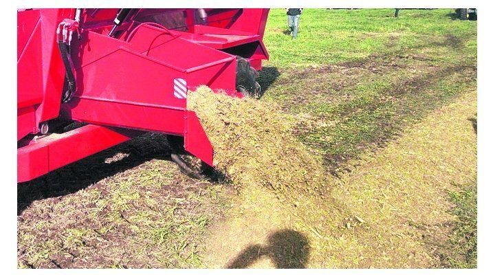 rol. Los forrajes conservados permiten hacer más eficiente la ganadería.