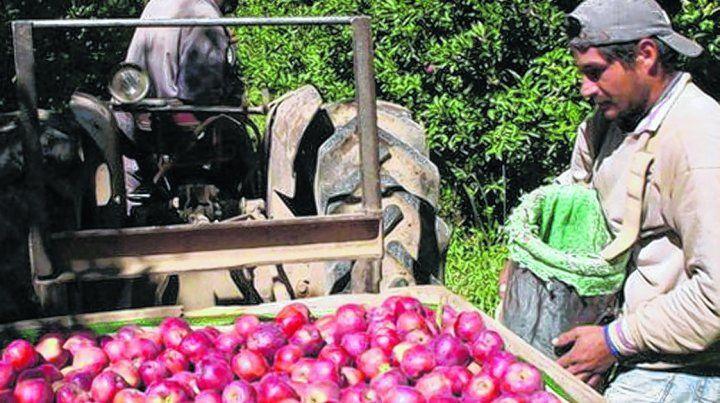 tendencia. La producción de peras y manzanas está afectada por el estancamiento económico.