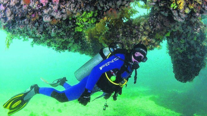 Visión maravillosa. Es un mundo aparte estar en el fondo del mar haciendo buceo y apreciando toda la naturaleza animal y vegetal que se brinda como una opción más en Puerto Madryn.