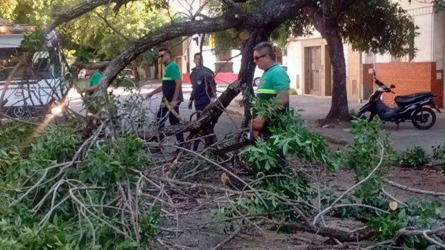 Defensa Civil trabaja en 21 reclamos por caída de árboles y ramas por la tormenta