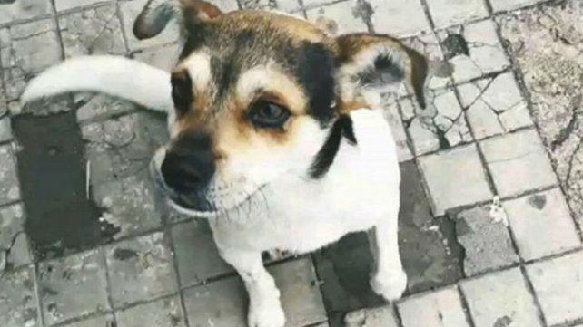 Denuncian el ataque con una picana a un perrito comunitario en Maciel