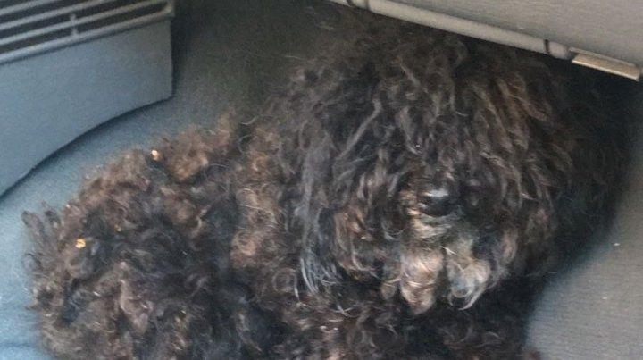Tiró el perro de su expareja a la basura y fue detenida