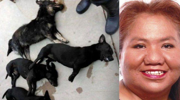 Ataque mortal. Una jauría de perros salchicha asesinó a una mujer en Oklahoma.