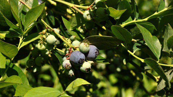 Frutas. El sector busca expansión.