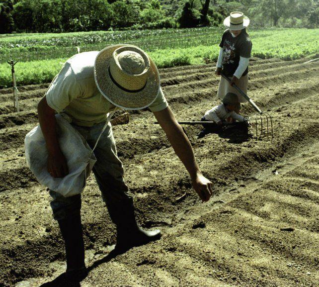 Los agricultores recurren a las enseñanzas de sus predecesores para el cultivo de hortalizas.